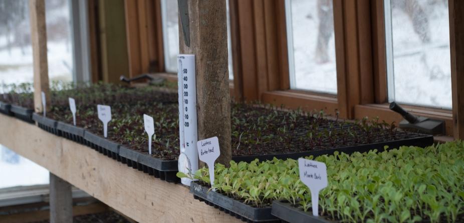 greenhouse-seedlings-2